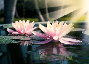 mindfulness a torino
